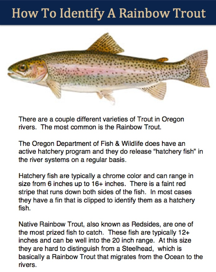 Trout Identifier